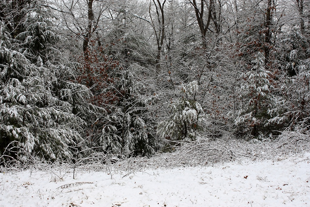 This picture is from the front yard this morning. This view is looking down the hill towards Black Brook.