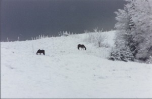Horses-on-snowy-hill.jpg