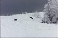 Horses on snowy hill