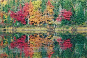 Reflection-of-foliage-along-the-Androscoggin.jpg