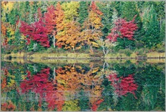 Reflection of foliage along the Androscoggin