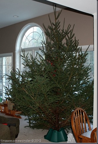This is our Christmas tree, the Griswold 2.0 (squirrel not included). I am in the background, holding up the tree. I am pretty small so the tree looks large.