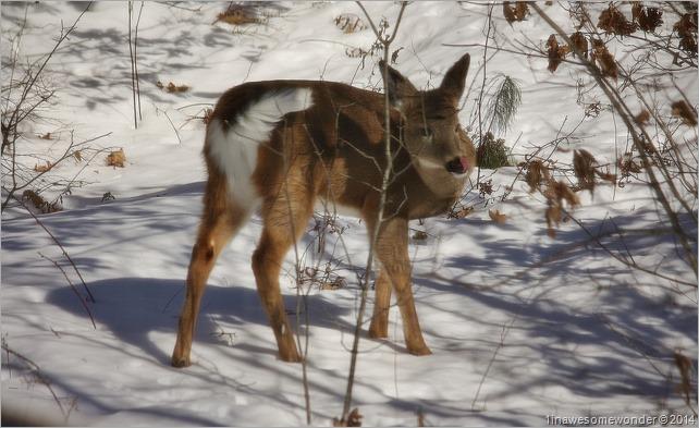 Deer-Licious!