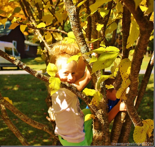Jacqueline climbs a tree while waiting for Mom at Coleman State Park 2014 (1280x1213)