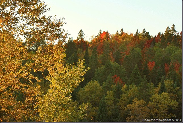 Yellows and Reds from Colebrook 2014
