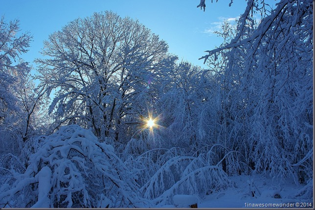 My backyard on Thanksgiving morning 2014. Now the snow is gone, and I hope to see some for Christmas.