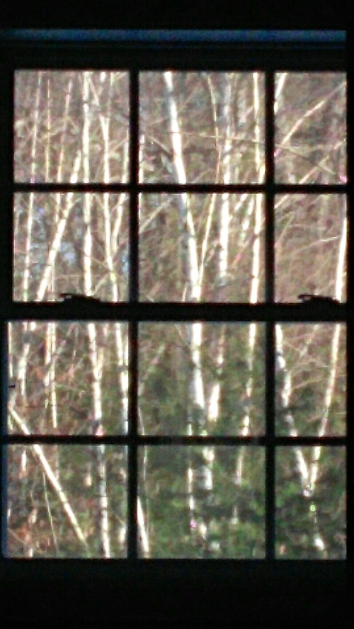 Looking from one room through another, to the backyard. The sunny afternoon and illuminated backdrop caught my eye. Thus, the picture from my cell phone.