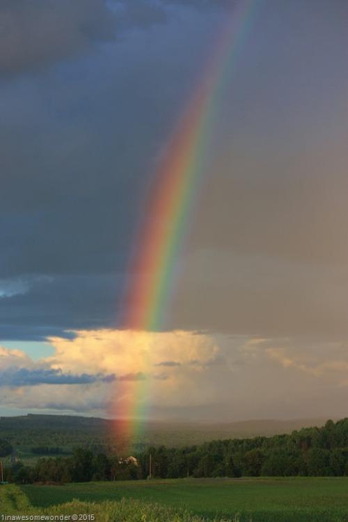 NB-RAINBOW-.jpg