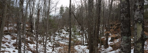 There is some rugged terrain out in this forest.