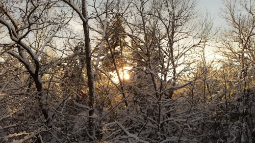 By late afternoon the sun made an appearance so we could see it set. The bright, yellowish glow on the white coated trees was a sight to see.